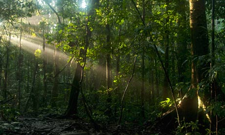 Sunrays coming through the mist, Yasuni National Park, Ecuador