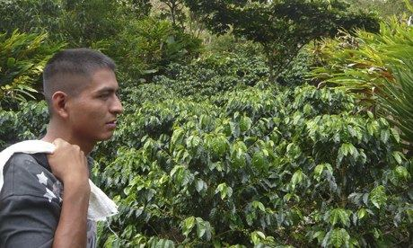 MDG : Mark Tran in Guatemala : Coffee grower Rolando Rax in Raxnam village