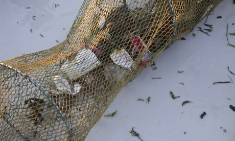 Plastic rubbish from bottom of river Thames in a fyke net to harvest invasive Chinese mitten crabs