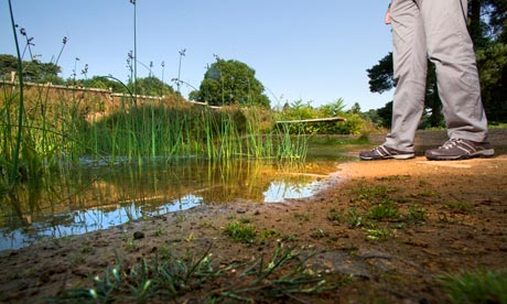 Hot weather and dought at RSPB reserve : The plantation pond is drying up at The Lodge in Sandy