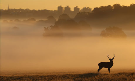 A Red Deer stags stands in the early morning mist in Richmond Park
