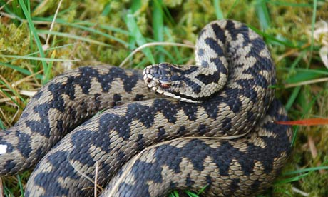 Adder health check
