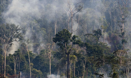 A burning sector of the Amazon forest in the northern state of Para. Photograph: Antonio Scorza/AFP/Getty Images