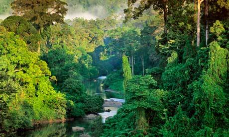 Rainforest in Danum Valley, Borneo