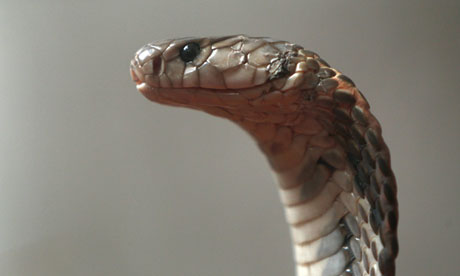 Nepal man bites snake to death