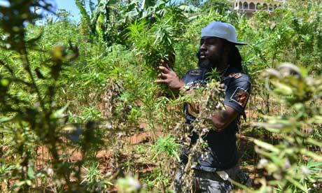 Jamaica's cannabis tours