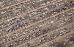 a cattle farm at Estancia Bahia, Mato Grosso in Brazil