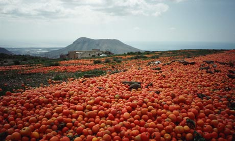 Food waste: Surplus tomatoes are dumped on farmland in Tenerife, Canary Islands, Spain