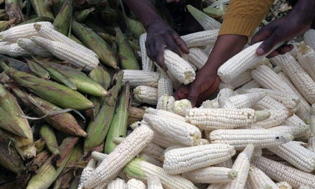 Maize: food prices have risen