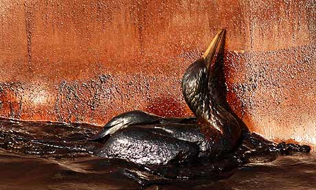 An oil soaked bird struggles against the side of the HOS Iron Horse supply vessel at the site of the Deepwater Horizon oil spill in the Gulf of Mexico off the coast of Louisiana. Photograph: Gerald Herbert/AP (Guardian / UK) - May 10, 2010