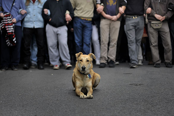 Greek riots dog: 10 December 2009: A stray dog sits during a student demonstration
