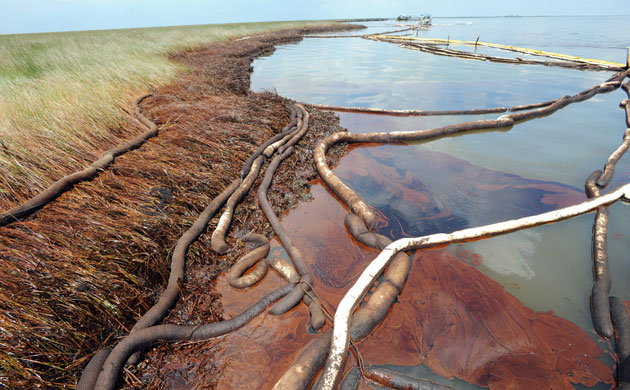 In Pictures Bp Oil Spill Clean Up Efforts Along The