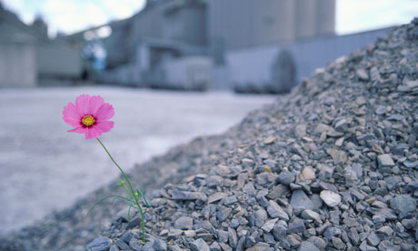 https://i1.wp.com/static.guim.co.uk/sys-images/Guardian/Pix/pictures/2011/4/11/1302517745311/Single-cosmos-flower-amon-009.jpg