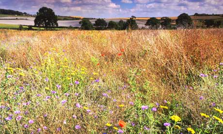 Wildflower meadow in Cheshire