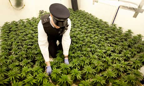 https://i1.wp.com/static.guim.co.uk/sys-images/Guardian/Pix/pictures/2012/7/26/1343306619063/cannabis-factory-in-a-hou-008.jpg