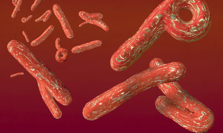 Why you need to be worried; Ebola Virus has killed about 700 people in Africa