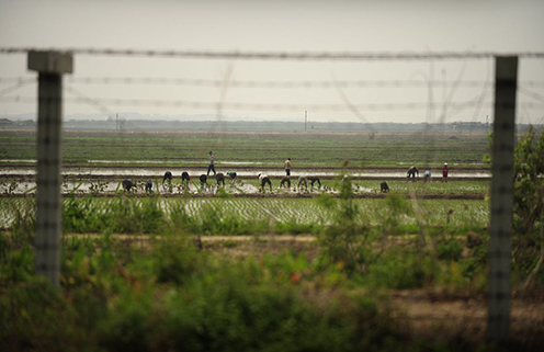 North Koreans work in a field near the border with China