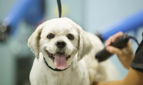 A dog being groomed at the Pets at Home superstore in Stockport, Greater Manchester