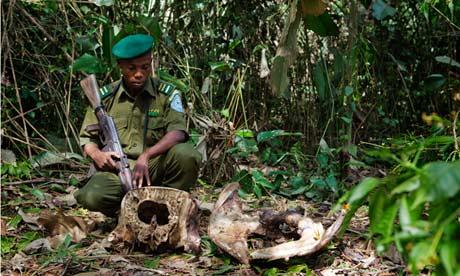 République démocratique du Congo de la faune du braconnage