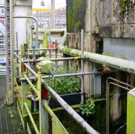This photograph sent to The Ecologist shows weeds growing around derelict machinery within the Sellafield facility.