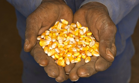 African hands hold corn