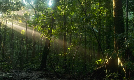 Almost 45% of the Yasuni national park is overlapped by oil concessions.