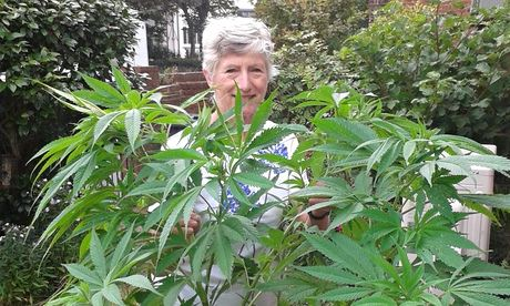 Patricia Hewitson and her cannabis plant