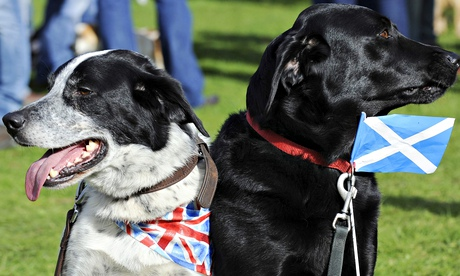 Dogs Asbo (L), wearing a union flag and