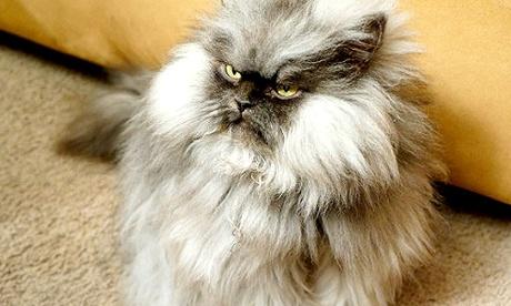 Colonel Meow.