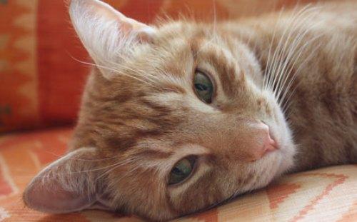 Orlando, o gato investidor.  foto : Jill Insley/The Guardian