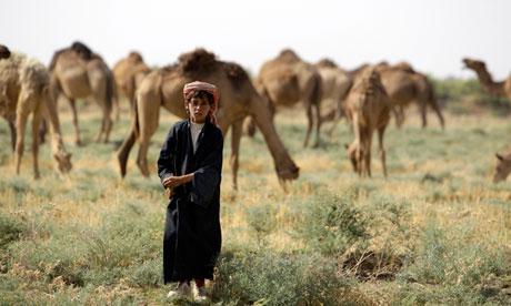 An Iraqi shepherd boy