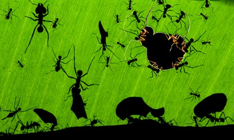 A marvel of ants by Bence Veolia Environment Photographer of the Year 2010