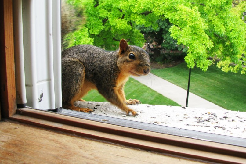 How Do You Get Rid Of Squirrels In Your Ceiling Shelly