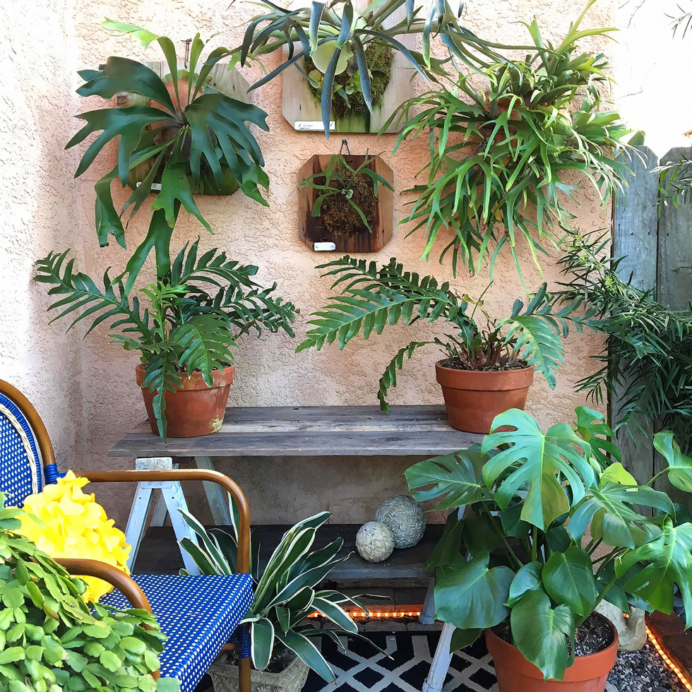 Small Patio Decorating Ideas   Fast-Growing Climbing Vines ... on Green Wall Patio id=87626