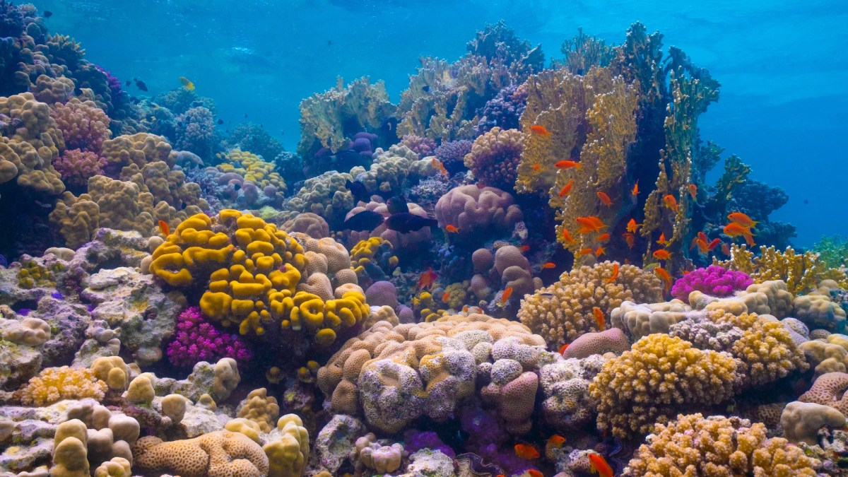 <p>The Red Sea Development Company will create sacrificial reefs to protect natural ones like those found in the Al Wajh Lagoon (pictured)</p>