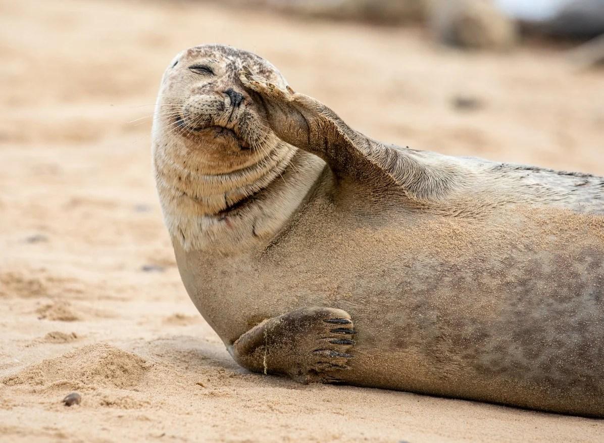 Ban selfies with seals, say British wildlife campaigners