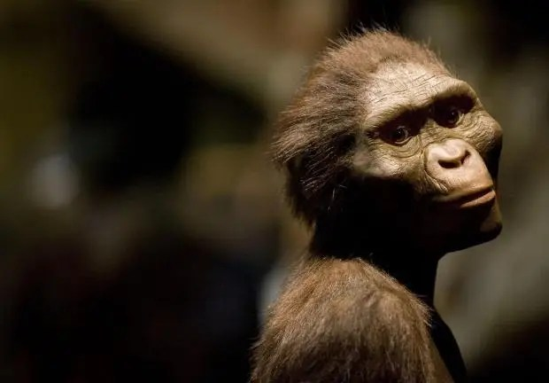australopithecus.jpg
