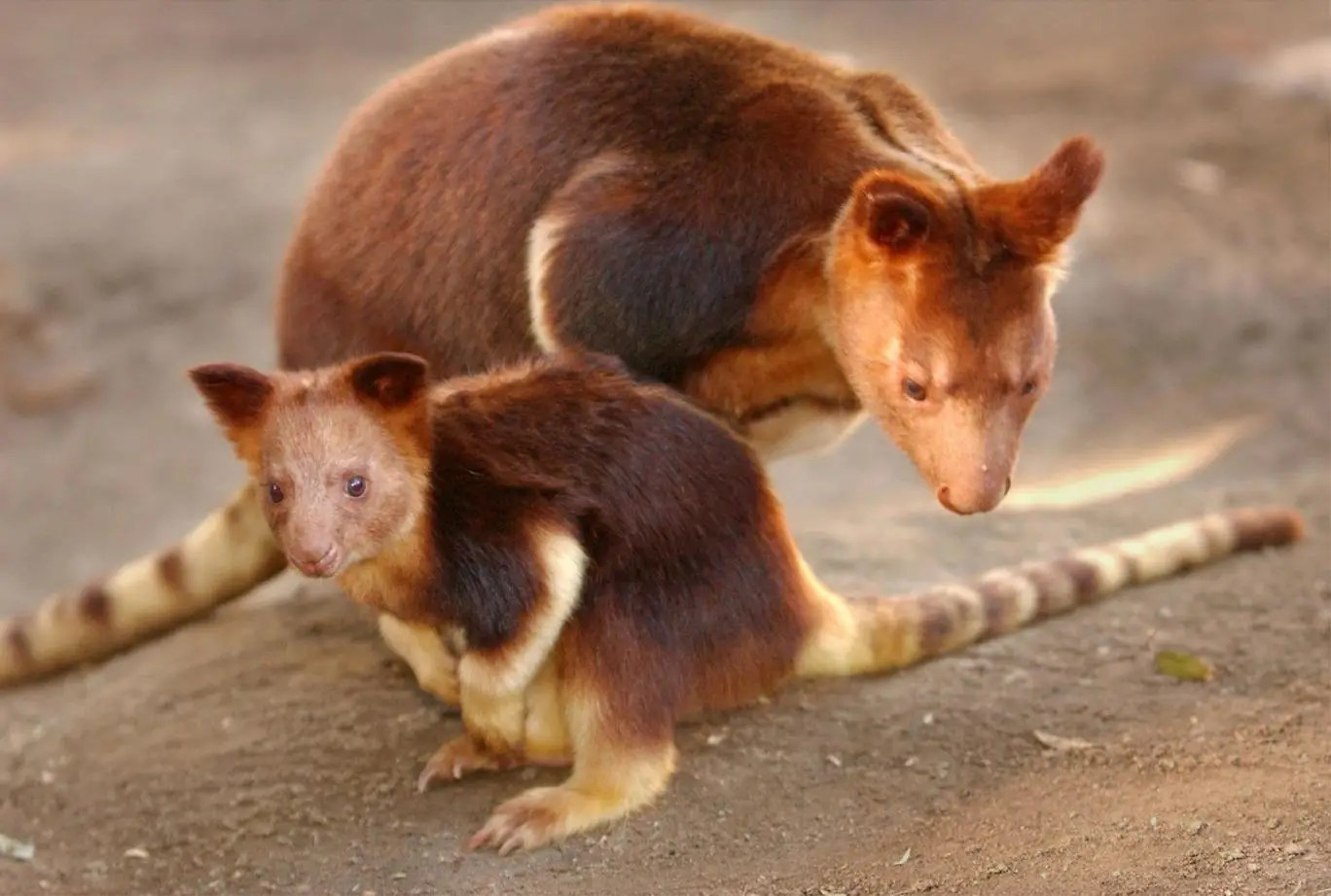 extinction and zoos Zoos are not saving animals from extinction most collections do not consist of endangered species and their animals are seldom returned to the wild sat 15 mar 2014 2005 edt first published on sat.