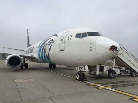egyptair-bird-strike-damage-heathrow-2.jpg