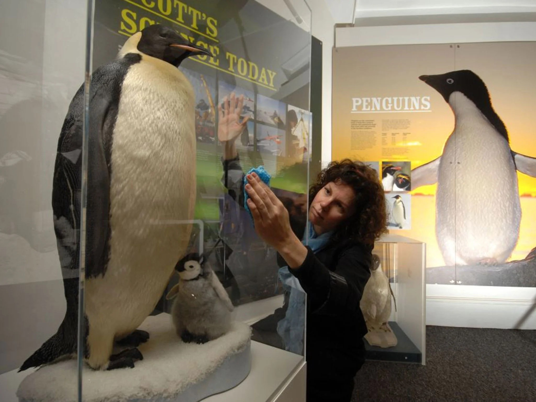 The Very Long March Of The Emperor Penguin