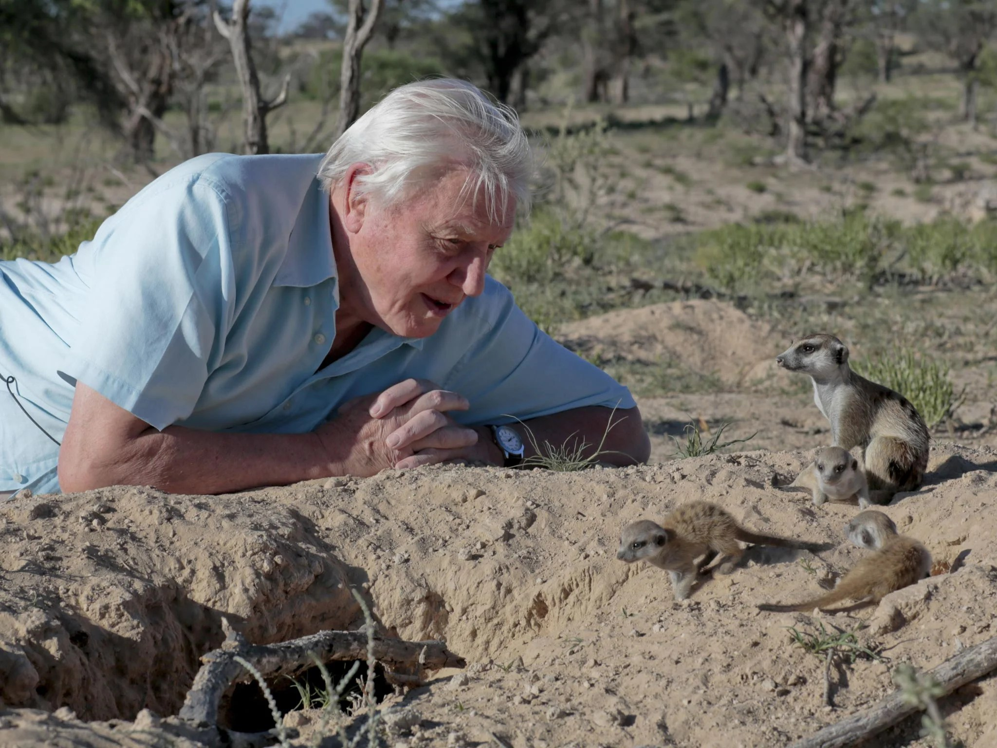 Planet Earth 2 David Attenborough To Make New Wildlife