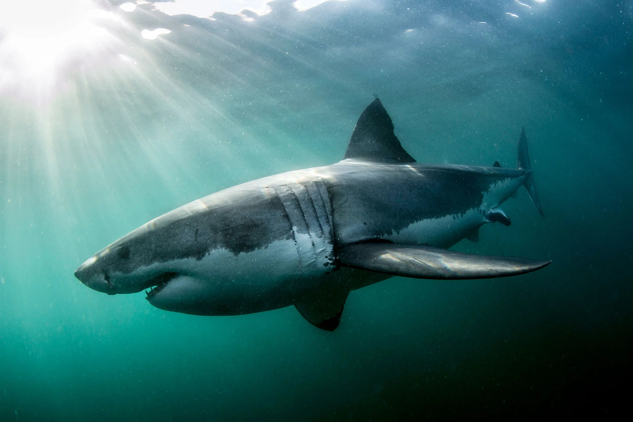 South African Fisherman Survives Great White Shark