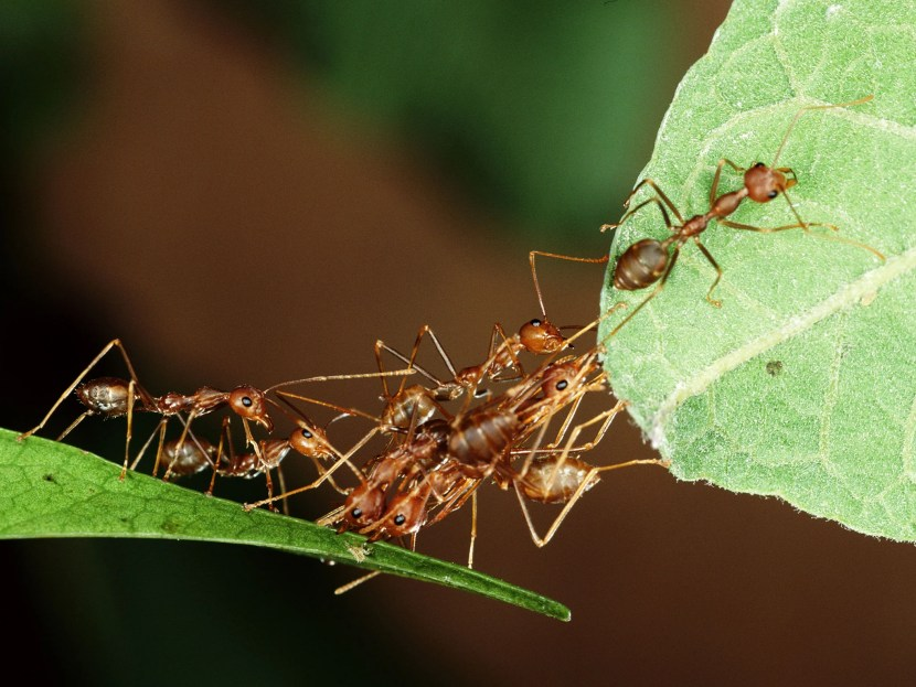 how-to-get-rid-of-ants-5