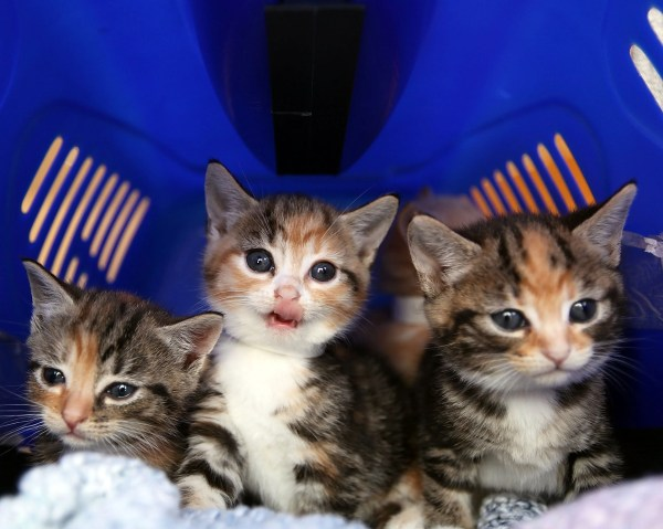 RSPCA responds to claims 'kittens being sold on Facebook ...