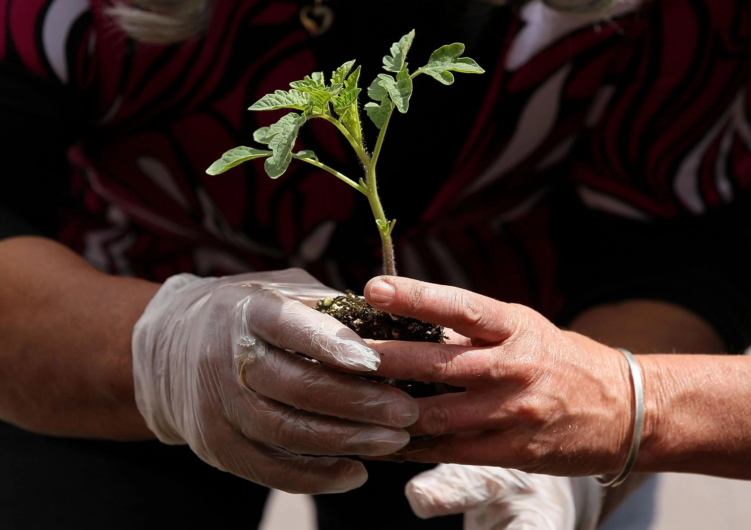 Earth Day Five Simple Things You Can Do To Help Make Our Planet Greener