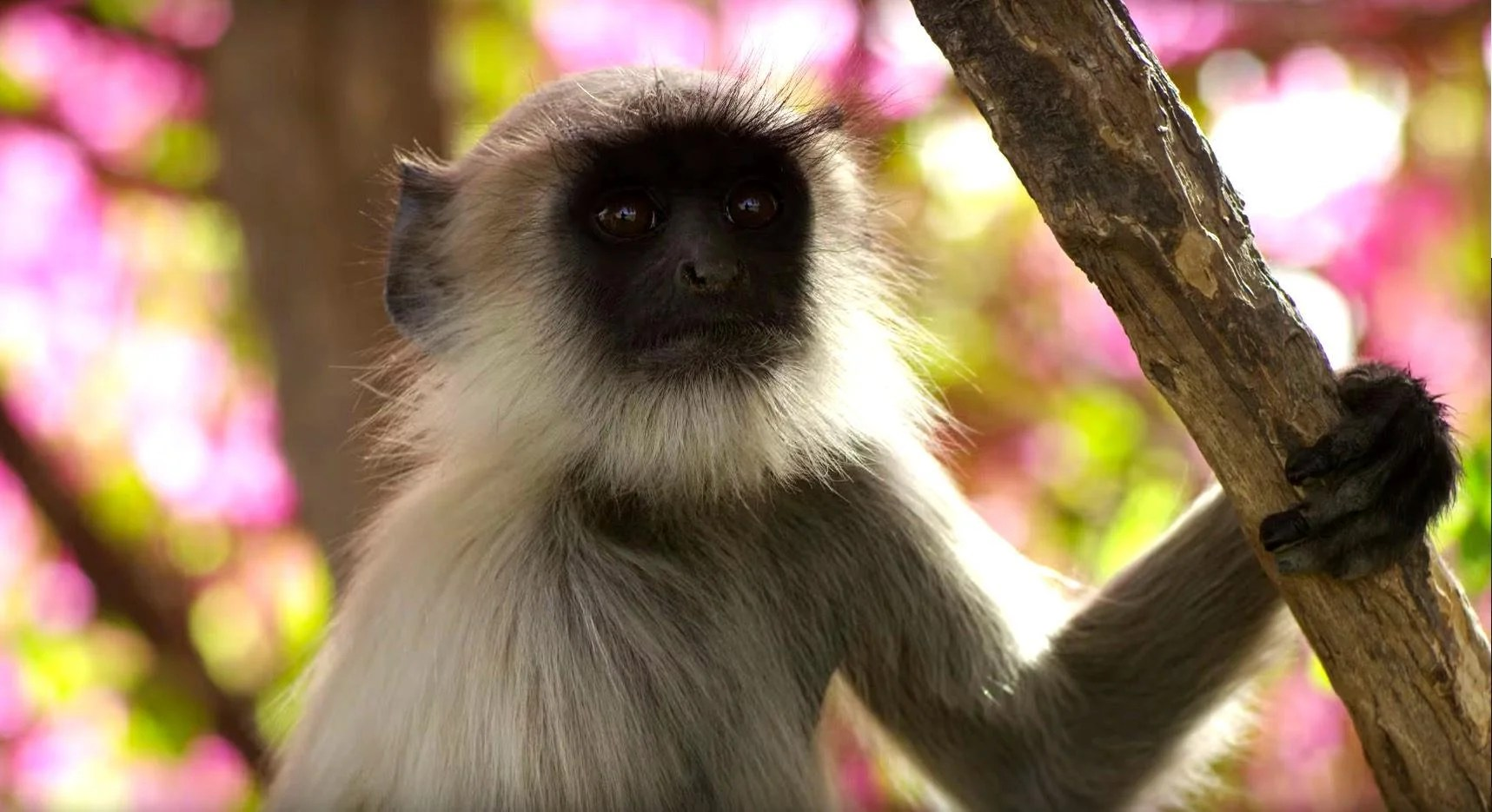 Planet Earth 2 Episode 1 Review Islands A Cinematic