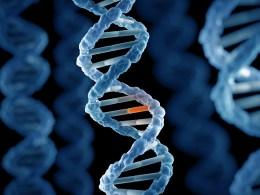Risultati immagini per genetic mutation