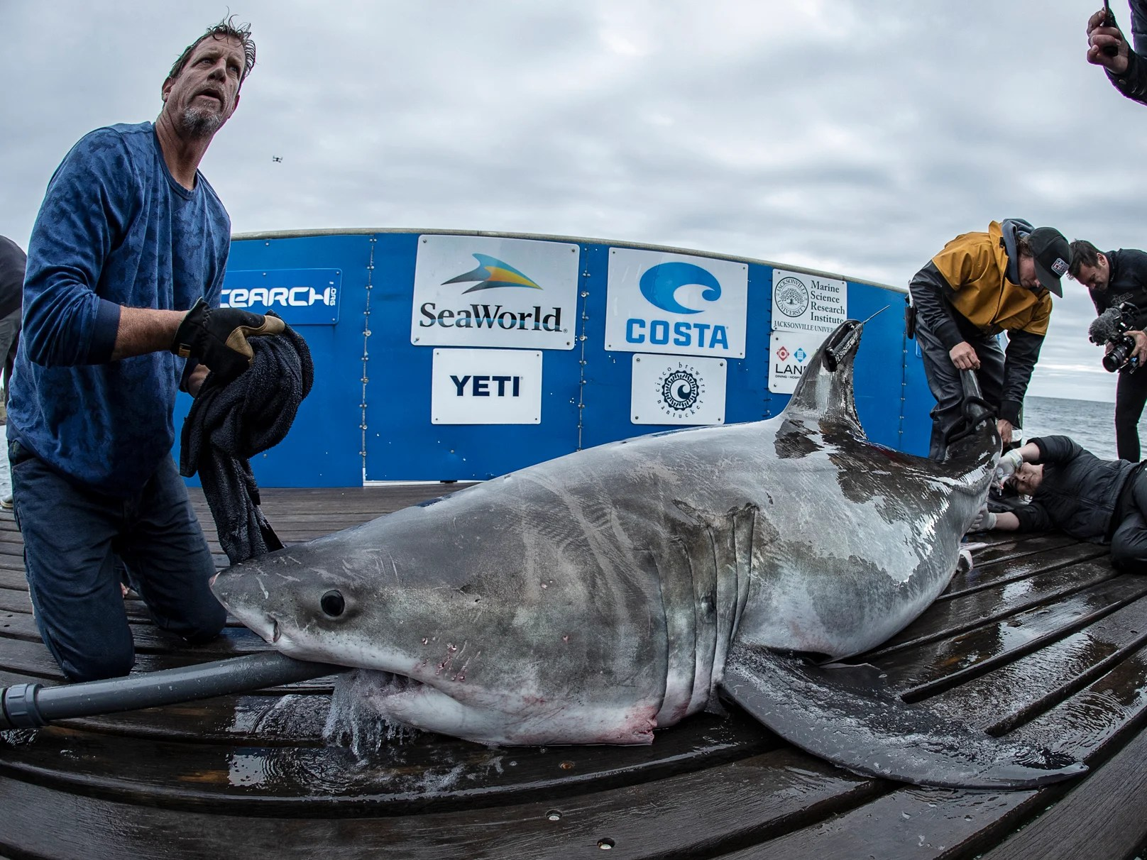 Great White Shark Spotted In Long Island Sound In Rare