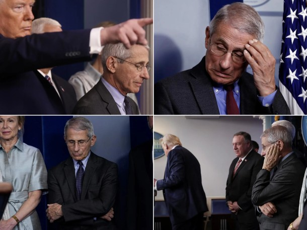 Image result for Dr fauci