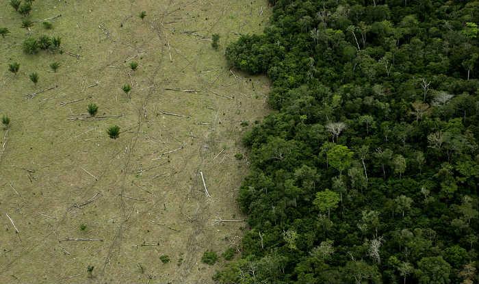 Record Deforestation in Brazilian Amazon Rainforest Continues